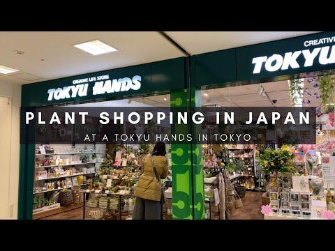 Houseplant Shopping in Tokyo, Japan   Plants in Japan Series   Ep 73