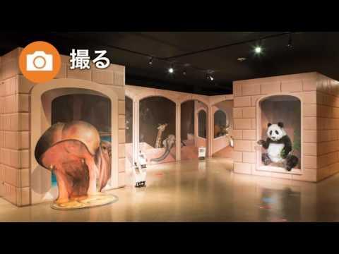 Kyu-Karuizawa Trick Art Museum - Art