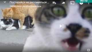 Кошки мяу ха-ха-ха