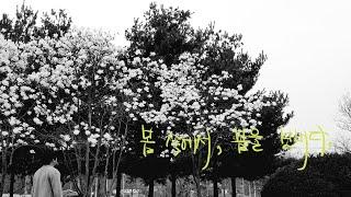 쑥을 캐니 꽃잎이 지고, 밤이 되니 가로등이 밝아지다.
