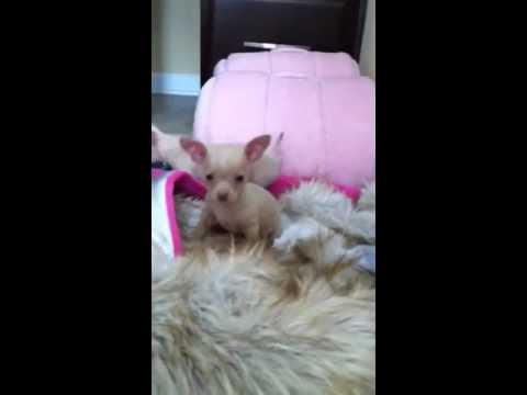 Video of adoptable pet Levi
