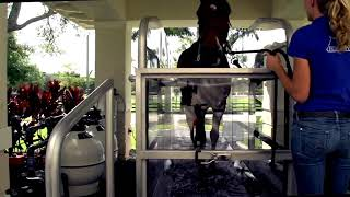 HORSE GYM USA® WATER