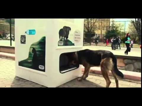 This Genius Machine Feeds Stray Dogs In Exchange For Recycled Bottles