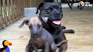 Injured Dog Knew Exactly What To Do When She Needed Help | The Dodo
