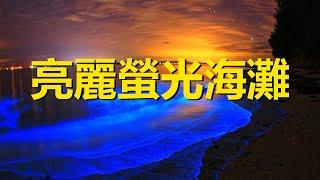 Download 世界上最亮的熒光海,由人類無意中創建,幾百年前被認為是魔鬼海,Bio Bay,the brightest sea of devil in the world