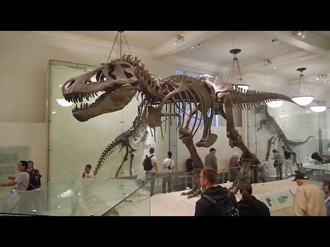 T-Rex Dinosaur Exhibition at the American Museum of Natural History, New York City (16/09/14) ! [HD]