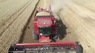 Уборка озимой пшеницы 2016 г