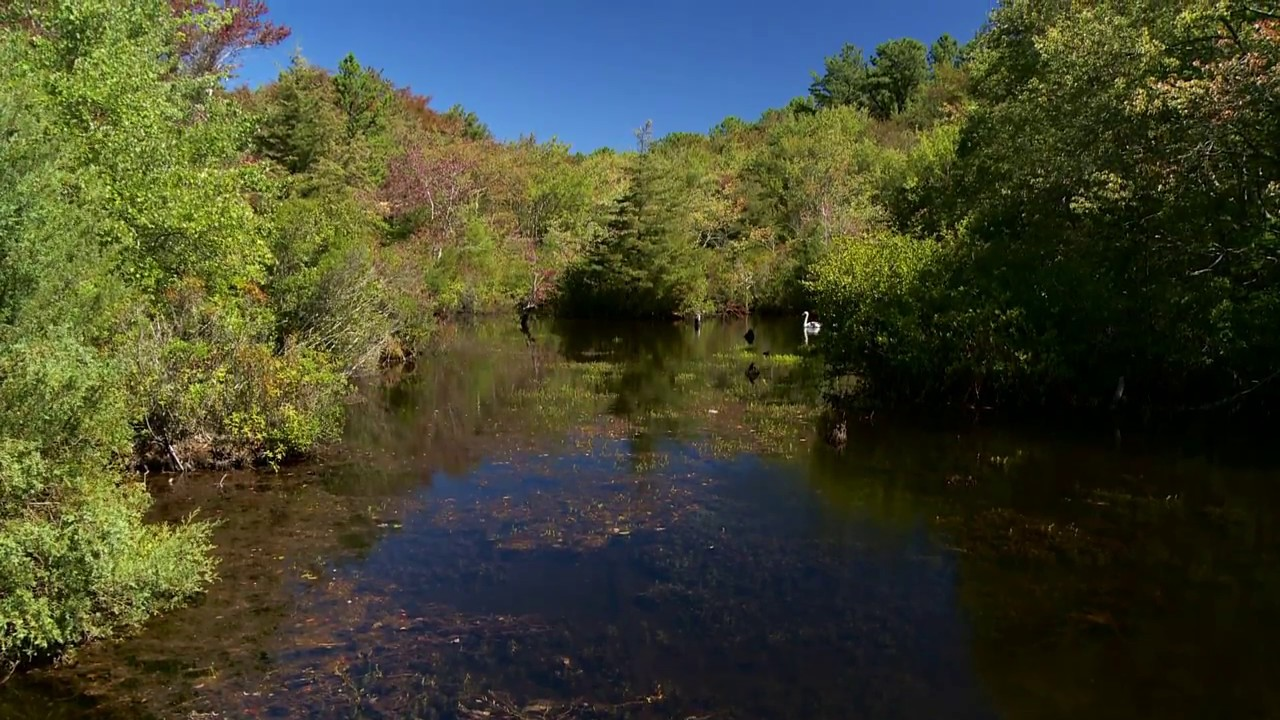 The Long Island Pine Barrens