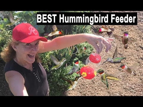 BEST Hummingbird Feeder TIPS Bring Hundreds Of Birds To Feed On Your Recipe Nectar