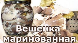 Вешенки маринованные: как замариновать грибы по простому рецепту