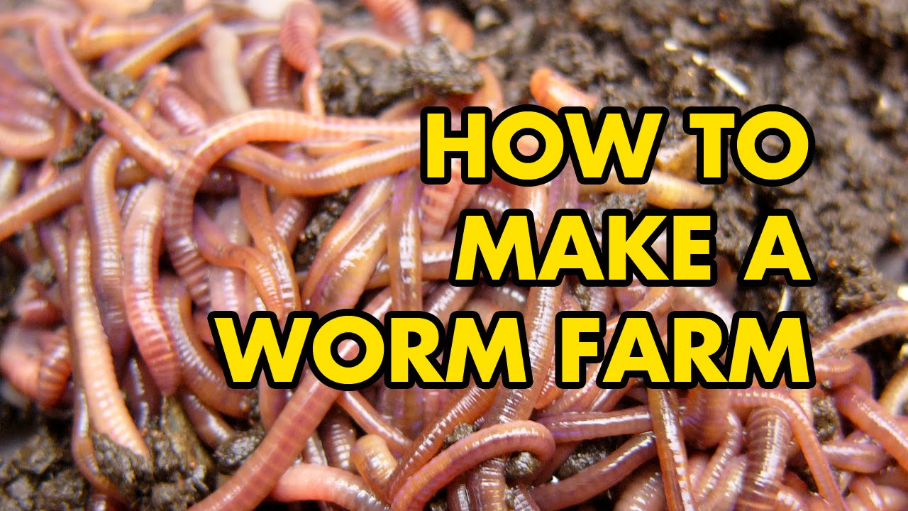 Diy Worm Farm Easy Guide Must Watch Video Youtube