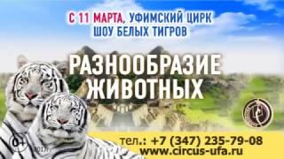 Залтания мир белых тигров