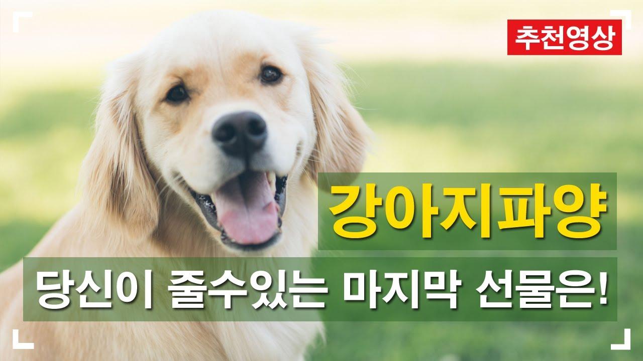 강아지파양 우리가 줄수 있는 마지막선물은? 아이들을 위한 안락사없는 강아지보호소!