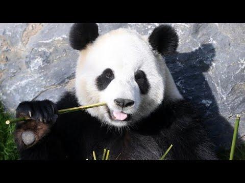 Panda-Syndrom