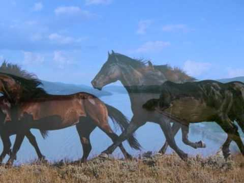 Horses - There is a Dream