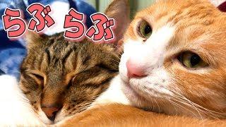 ぎゅっと抱きしめられて寝る仲良しな猫たちがあまりにも可愛すぎた…