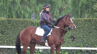 Training the Racehorse: Big Hoof Ready To Go