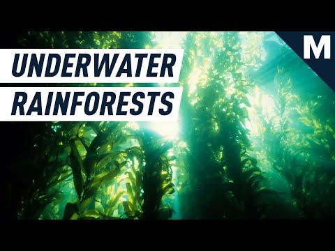 Underwater Rainforests Pioneer Zero-Input Crops | Mashable