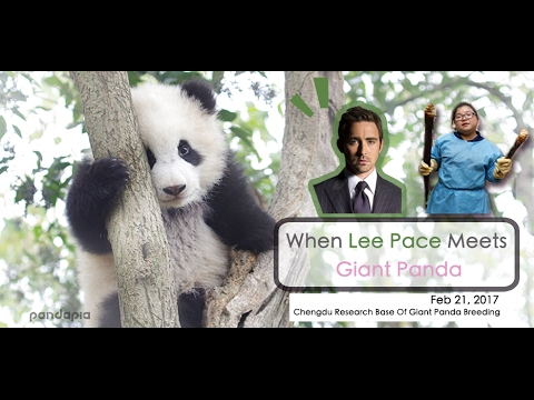 When Lee Pace Meets Giant Panda