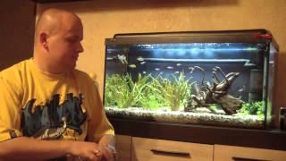 Porady przy zakładaniu akwarium - Piwne Bąble Specjal