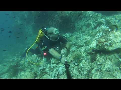 plongée sous marine a oran