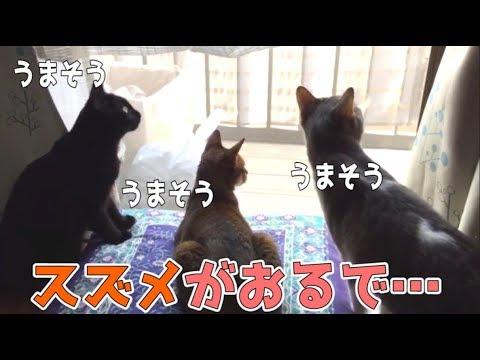 窓の外にスズメがいた時の猫たちの反応が可愛かったwww