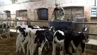 Une Matinée dans une exploitation laitière