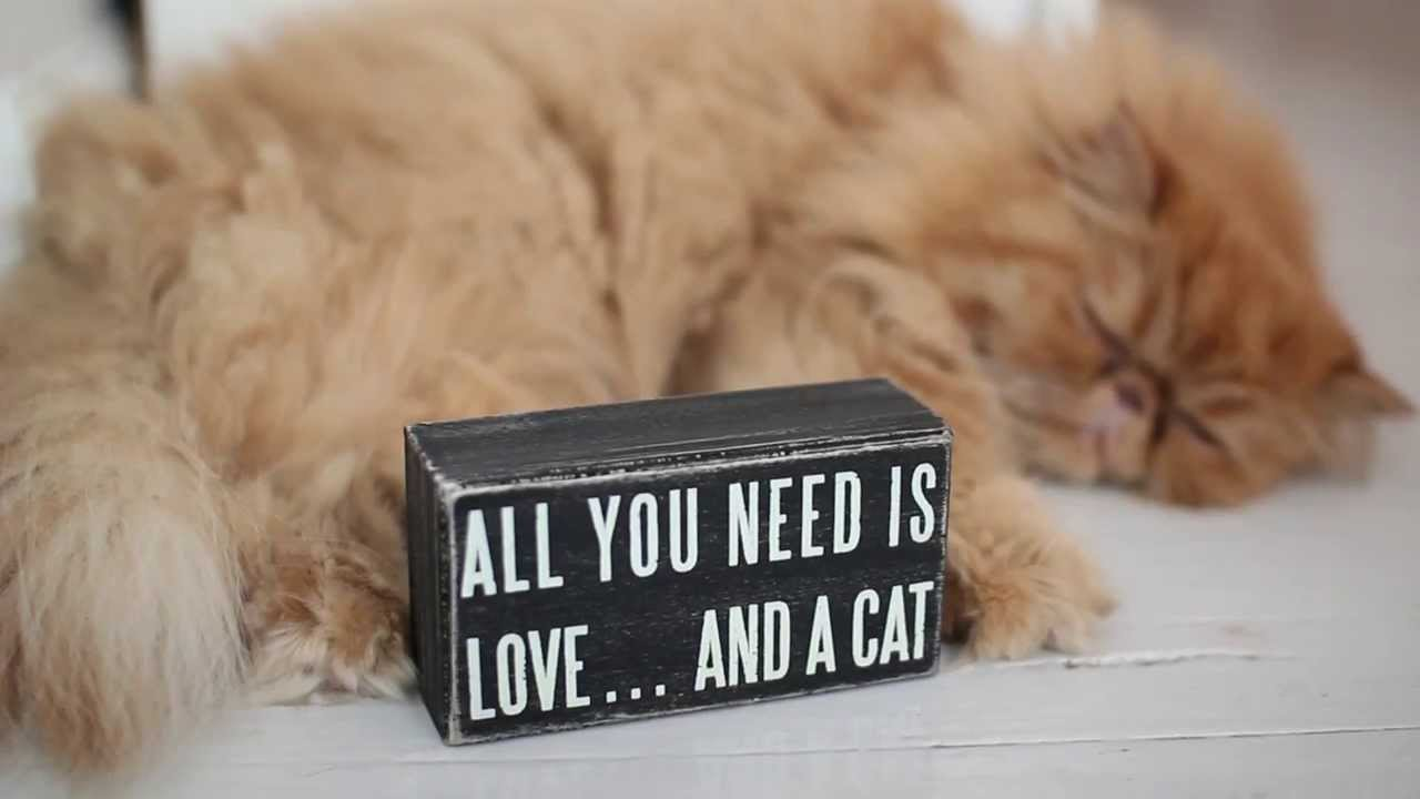 Download All You Need is Love... and a Cat - YouTube