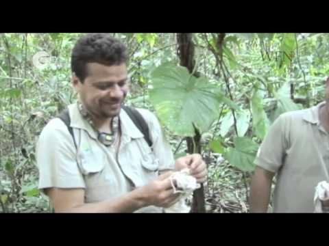 Bernal Rodriguez Herrer - Bat conservation in Costa Rica