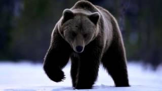 Звуки Животных и их голоса!
