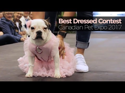 The Best Dressed Contest at the Canadian Pet Expo 2017