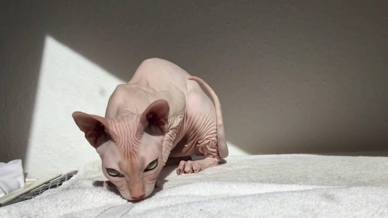 katzen nackt bei geburt