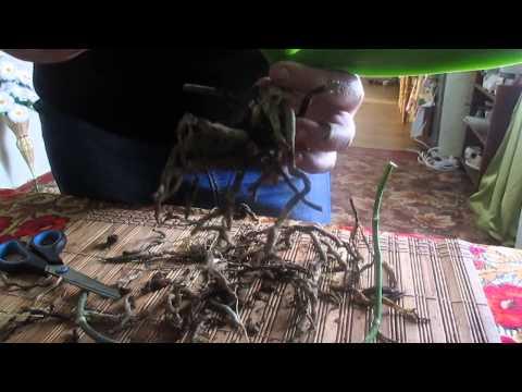 Болезни орхидей Консультация специалиста