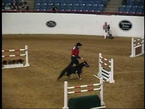7de3a482d 2010 American Miniature Horse Champ Jumper - YouTube