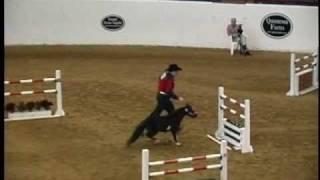 2010 American Miniature Horse Champ Jumper