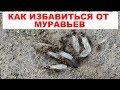 Как избавиться от муравьев на даче или в огороде Простой народный способ как уничтожить муравьев mp3