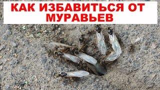 видео Как избавиться от муравьев в огороде