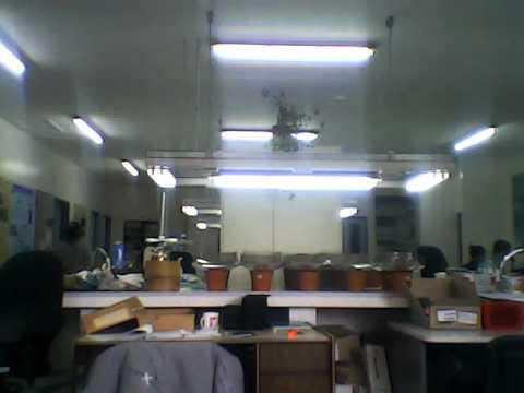 Un dia en el Laboratorio Forestal del CADIC - CONICET ARGENTINA