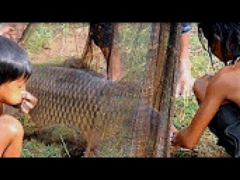 Top AMAZING Net Fishing - Net Fishing at Kompong Spue Province - Cambodia Traditional Fishing #2