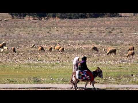 Ifrane National Park video