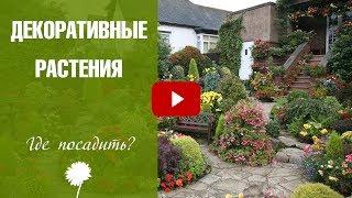 видео озеленение и цветочное оформление