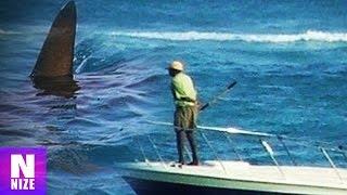 Riesenhai Megalodon Aufgenommen Auf Kamera - Fake oder Echt