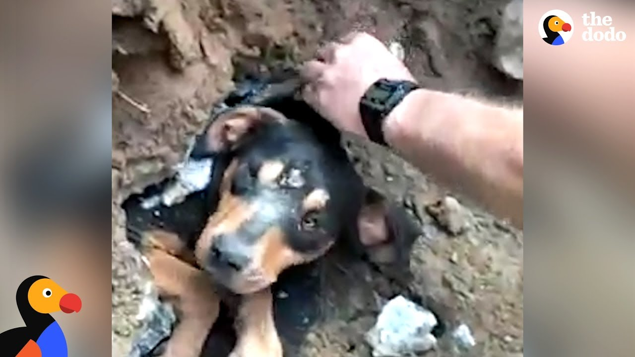 People Determined to Save Dog Trapped in Pipe