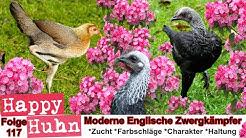 E117 Moderne Englische Zwergkämpfer im Rasseportrait - HAPPY HUHN - Kämpfer Kampfhühner MEZK Hühner