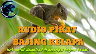 SUARA PIKAT BAJING KELAPA download mp3