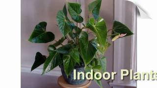 Interior Office Plants - We Make Your Workspace Green