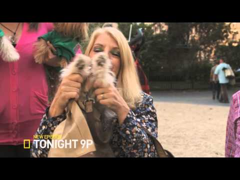 Spoiled Rotten Pets Episode 1