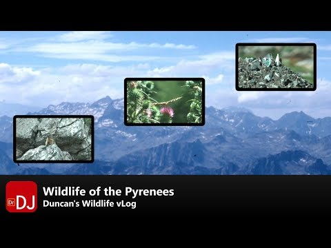 Wildlife of the Pyrenees | vLog #4 | Nature Travel Guide