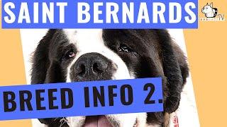 Saint Bernard Dog Breed  Part 2   DogCastTV