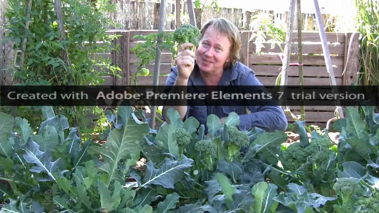 how to grow vegetables documentary